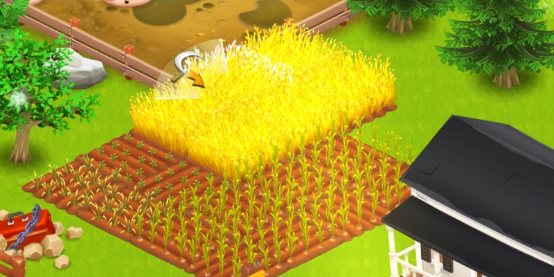 Hay Day culture blé