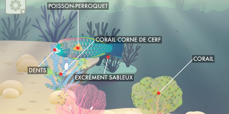 Les récifs coralliens poisson perroquet