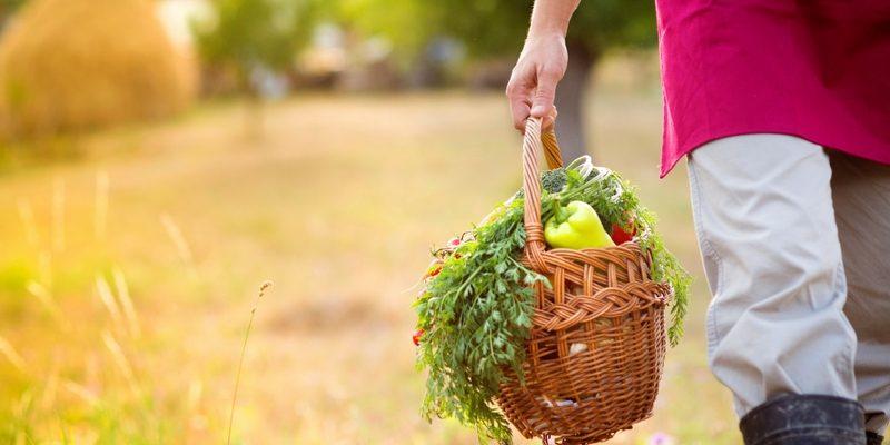 potager ferme legumes