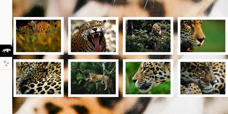 WWF Together jaguar application sur les animaux en voie de disparition
